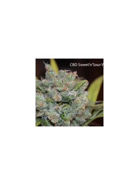 Nasiona CBD Sweet and Sour Widow